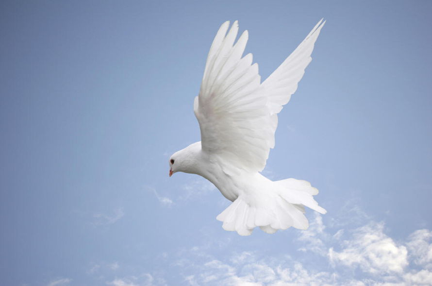 The Gifts Of The Holy Spirit (Series)