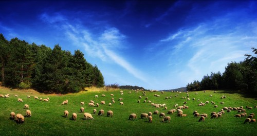 Smite The Shepherd & Scatter The Sheep