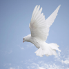 http://victorrockhillministries.com/vrm_messages/wp-content/uploads/2015/04/gift_of_the_holy_spirit.png