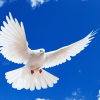 https://victorrockhillministries.com/vrm_messages/wp-content/uploads/2015/04/the_gift_of_the_holy_spirit.png