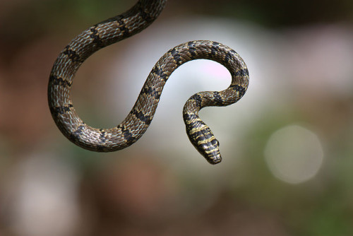 Serpent on a Pole