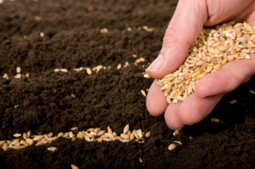 Sowing and Reaping Works For Good